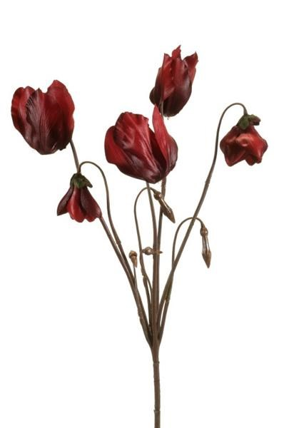 cyclamen burgundy - 40 cm bordeaux